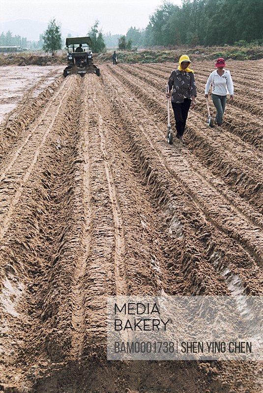 Farmers plowing farm, The Pingtan County Famer plants the radish, Pingtan County, Fujian Province of People's Republic of China