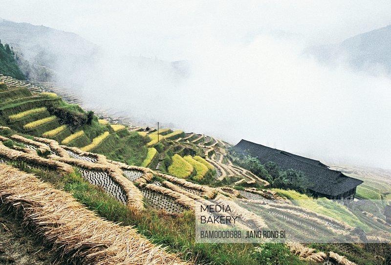 The autumn harvest terraced fields in Longji mountain, Longsheng County, Guilin City, Guangxi Zhuang Nationality Autonomous Region of People's Republic of China