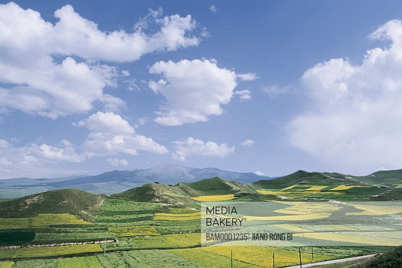 Elevated view of field with mountains in background, The rape flower in Qinghai Plateau, Xining City, Qinghai Province, People's Republic of China