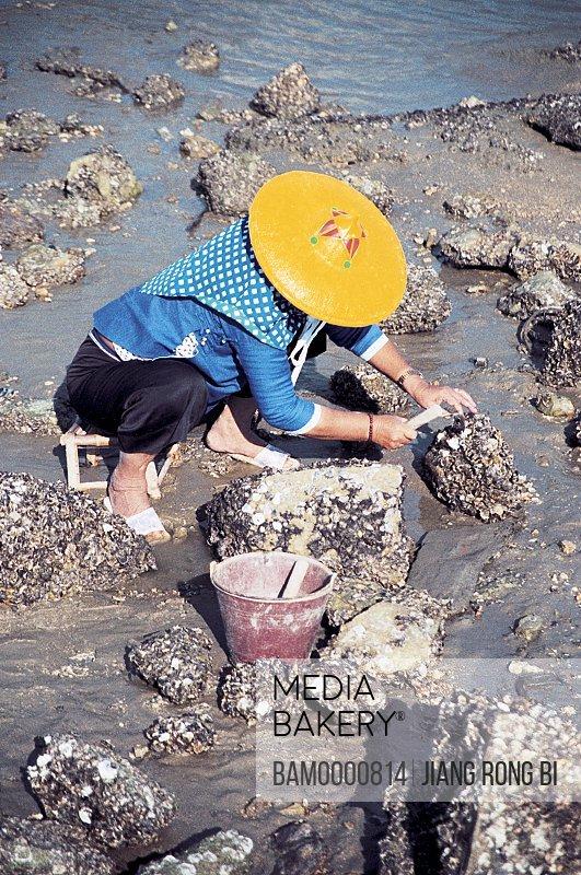 Huian woman digging for oysters, Chongwu Town, Huian County, Fujian Province, People's Republic of China