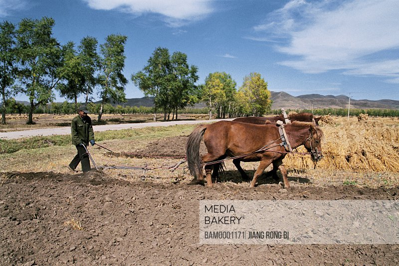 Man working in field with mountains in the background, Peasant ploughed fields with horse, Guyuan County, Hebei Province of People's Republic of China