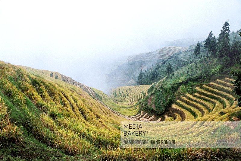 The scenery of Longji terraced fields, Longsheng County, Guilin City, Guangxi Zhuang Nationality Autonomous Region of People's Republic of China