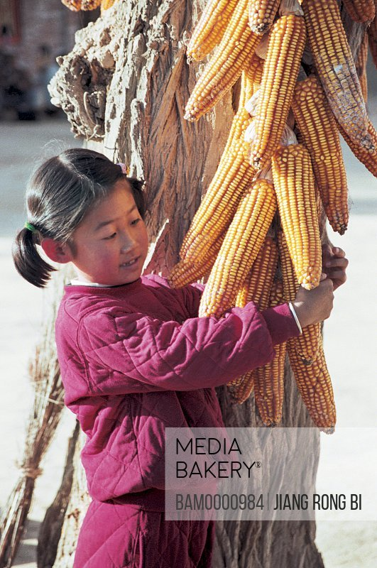 View of a girl holding corns, Little Girls below Corns , Yichuan County, Yan'an City, Shanxi Province, People's Republic of China
