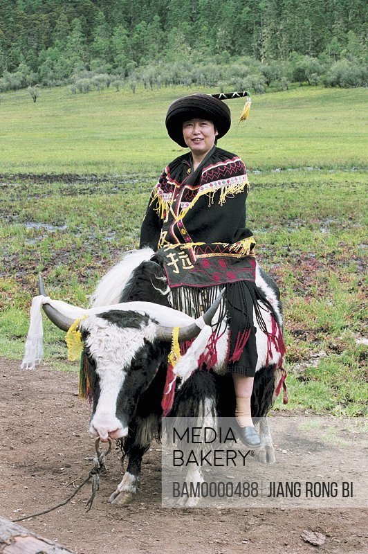 Portrait of a man sitting on yak, Tourists in Tibetan Robe and on Yak , Shangri-la County, Diqing Prefecture, Yunnan Province, People's Republic of China