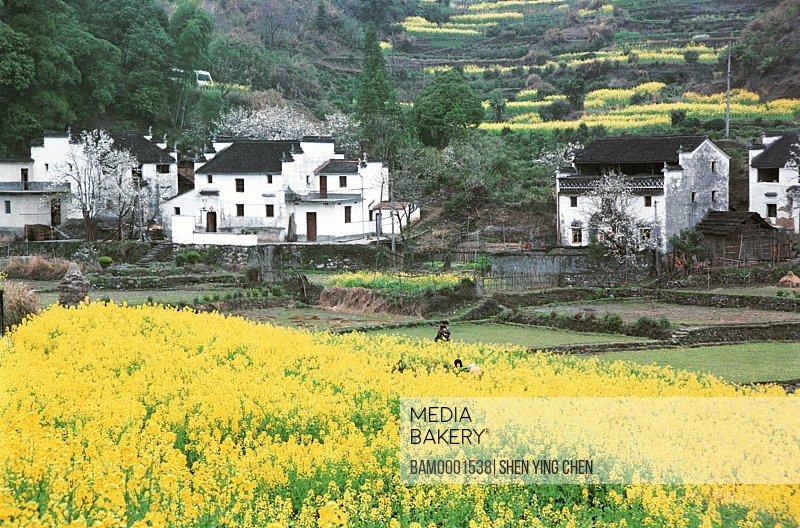 Rural scenery of Jiangling village, Qinghua Town, Wuyuan County, Jiangxi Province of People's Republic of China
