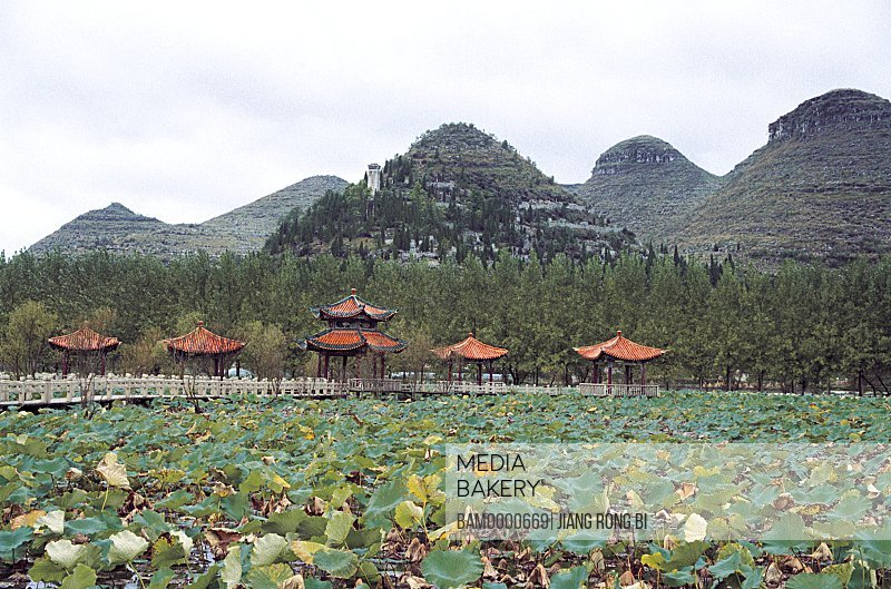 Scenery of lotus flower garden in Zhaodi scenic area, Anlong County, Guizhou Province of People's Republic of China