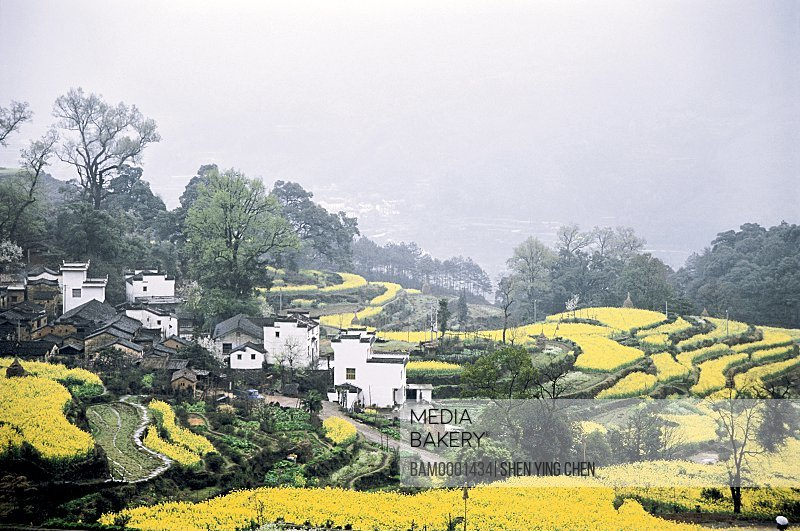 Rural scenery of Jiangling village, Jiangling Village, Wuyuan County, Jiangxi Province of People's Republic of China