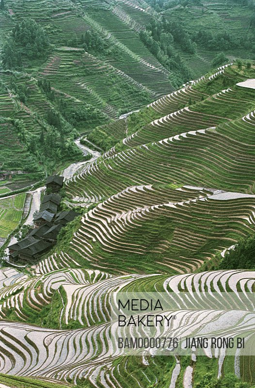 Elevated view of Longji terracedfields, Longsheng County, Guilin City, Guangxi Zhuang Nationality Autonomous Region of People's Republic of China