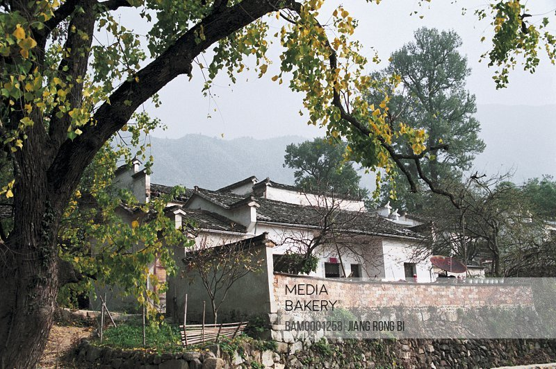Trees by house with mountains in the background, Courtyard of Farmhouse in Tachuan Village, Yixian County, Anhui Province, PRC