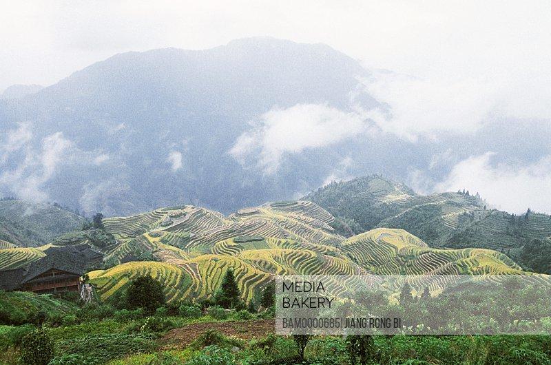Scenery of Longji terraced fields, Longsheng County, Guilin City, Guangxi Zhuang Nationality Autonomous Region of People's Republic of China