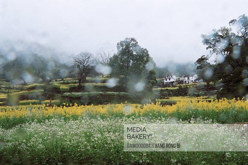 The scenery of spring rain in Jianglin Village, Jiangling Village, Wuyuan County, Jiangxi Province of People's Republic of China