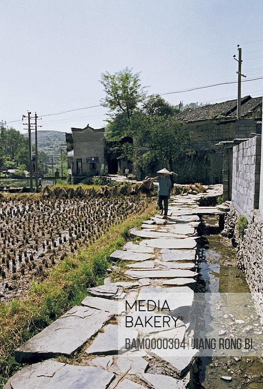 Farmer walking on rock road beside field, The green rock road in Shibanzhai of Fenghuang ancient city, Fenghuang, Xiangxi Prefecture, Hunan Province, People's Republic of China