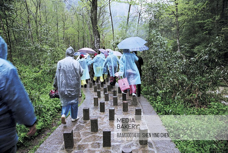 People walking on walkway in forest, Jinbian scenery of Zhangjiajie, Zhangjiajie City, Hunan Province of People's Republic of China