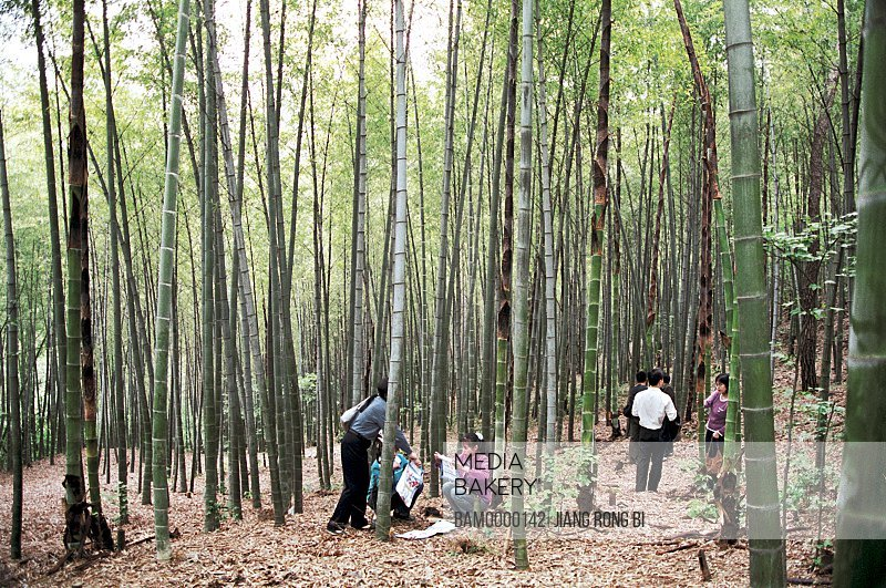Tourists standing in a forest, The bamboo gardens in Lingyan Mountain in Mudu Town, Mudu Town, Suzhou City, Jiangsu Province of People's Republic of China