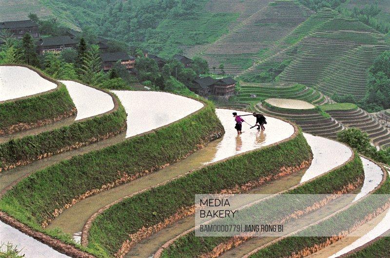 Yao minority people break ground in the terraced fields in Longji mountain, Longsheng County, Guilin City, Guangxi Zhuang Nationality Autonomous Region of People's Republic of China
