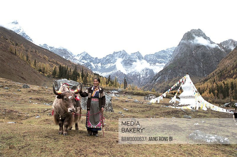 View of woman standing by yak with mountains in background, The Zang nationality people and yaks, Xiaojin County, Aba State, Sichuan Province of People's Republic of China