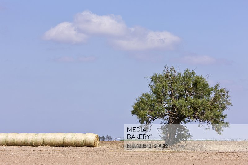 Hay Bales and a Tree