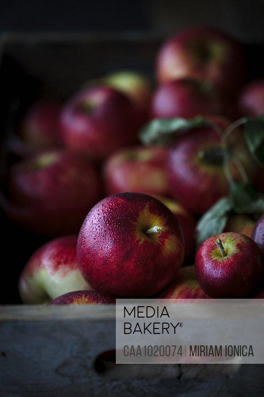 Fresh juicy red apples