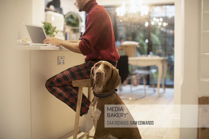 Portrait dog next to young man working from home at laptop in kitchen