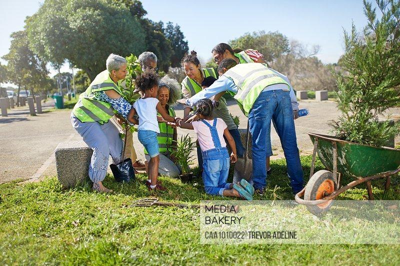 Community volunteers planting trees in sunny park