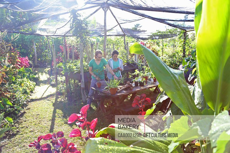 Couple gardening in sunny garden under canopy