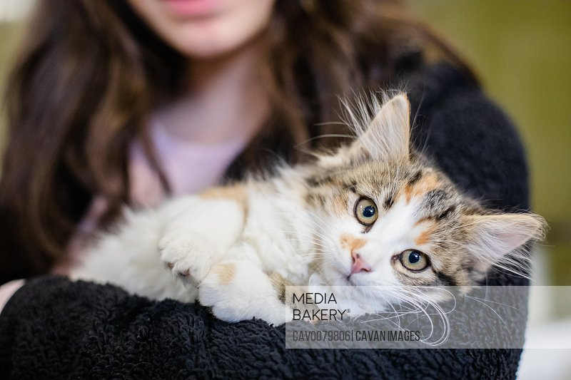 Cute and Adorable Kitten and Cat Portrait with Behavior and Pers