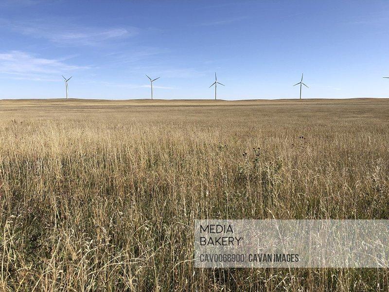 Wind farm and tall wheat grass