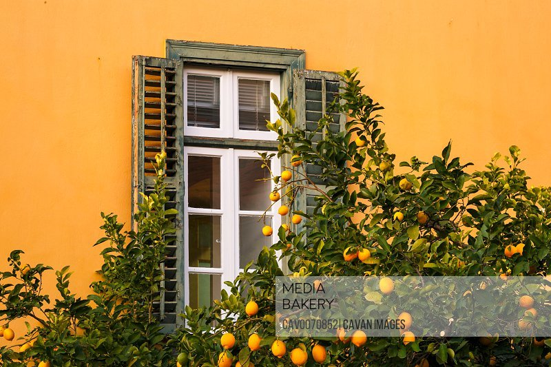 Lemon tree and a window in Plaka, the old town of Athens, Greece.