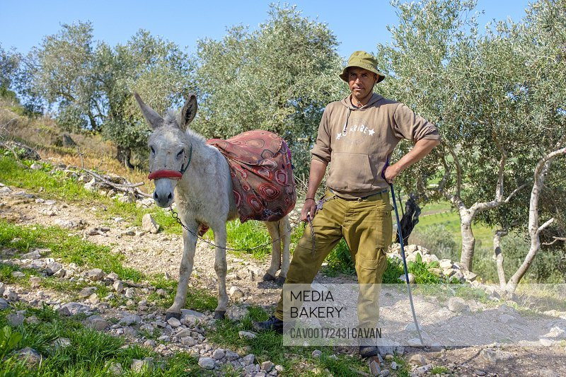 Palestinian shepherd with donkey, Sanur, Jenin, West Bank, Palestine <br><br><span style='color: red'>Editorial Use Only.</span><br><br>