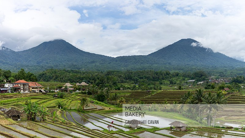 Jungle covered mountains reflecting in rice terraces