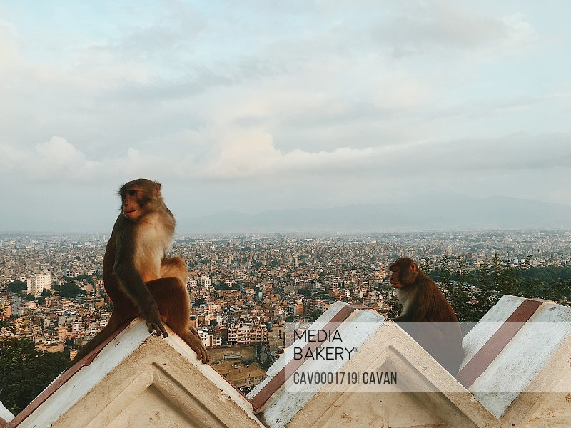 Monkeys sitting on building overlooking city in Southeast Asia