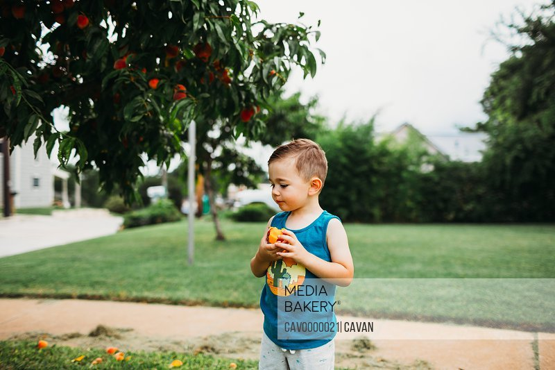 Young boy standing in front yard eating freshly picked peaches