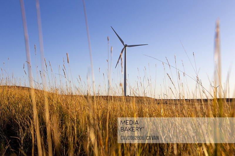 Colorado Wind Farm located on wheat field