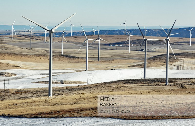 Wind turbines in a field with clear sky