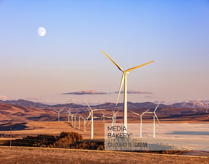 Wind turbines in a field with clear sky and moon