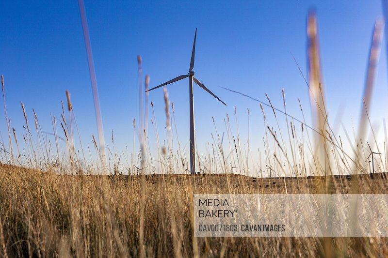 Wind Turbine in a field against blue sky