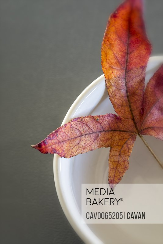 Autumn leaf lying in a white bowl.
