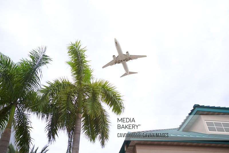 Airplane flying over the palm trees and residential building
