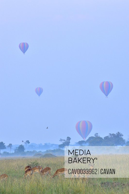 Hot air balloons over the savannah