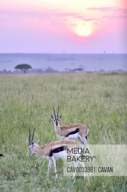 Sunrise over the savannah