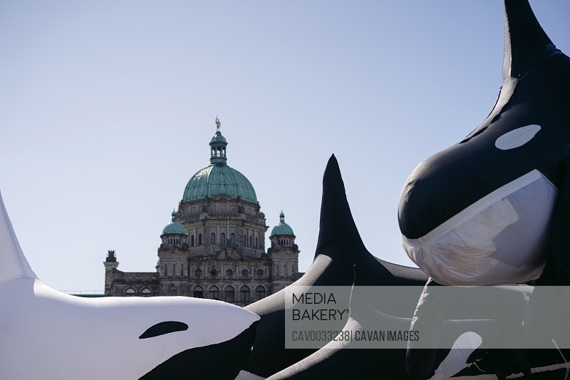 Blow up orcas and government building