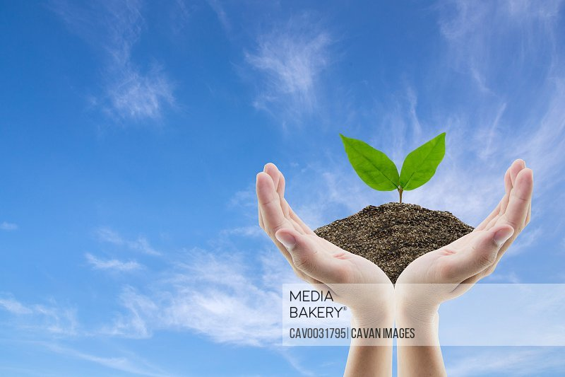 Hand holding soil and tree of sky background with environment co