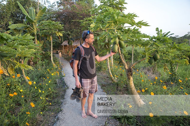 A man examines papayas in a lush Vietnamese setting. <br><br><span style='color: red'>Editorial Use Only.</span><br><br>