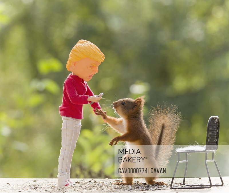 red squirrel and microphone with a doll