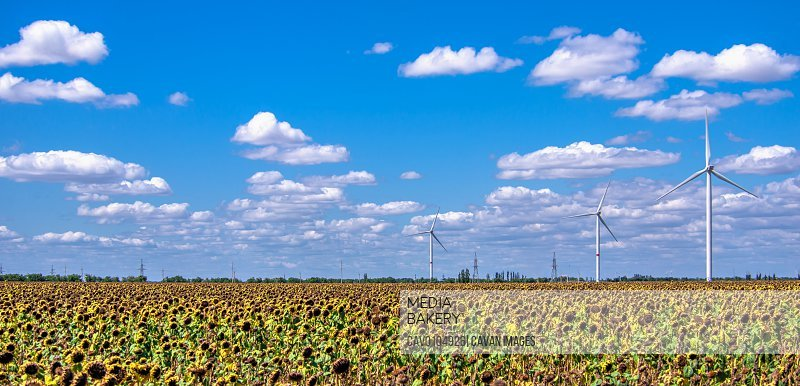 Wind generators in a sunflower field against a cloudy sky