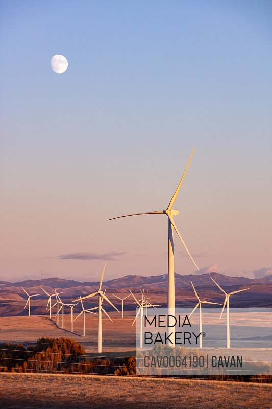 Wind turbines in a field with clear sky and the moon