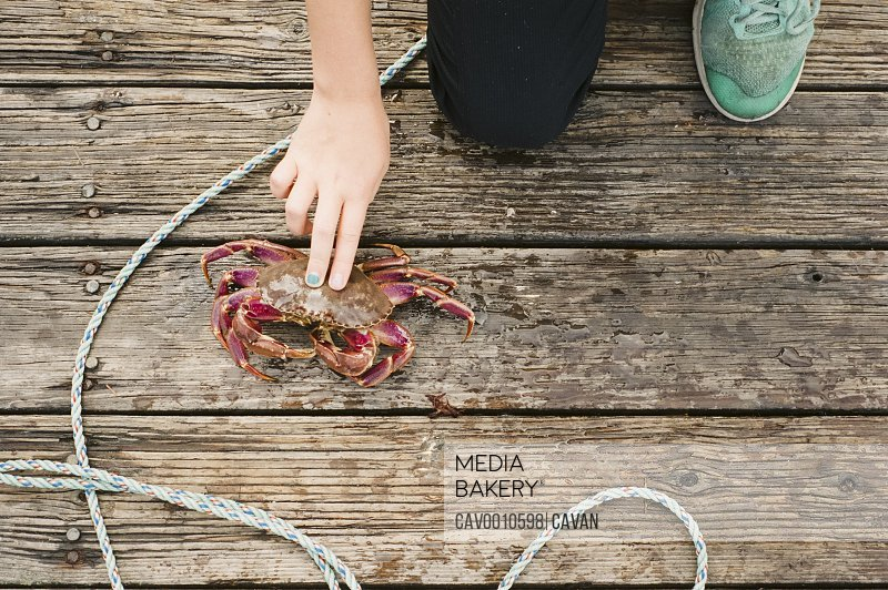 Child Kneeling on Dock with Two Fingers Touching Live Crab
