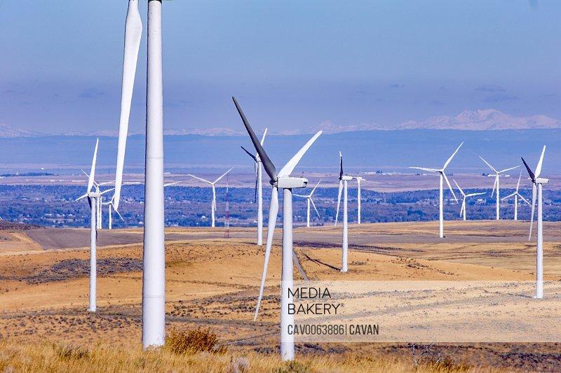 Wind turbines in field against blue sky