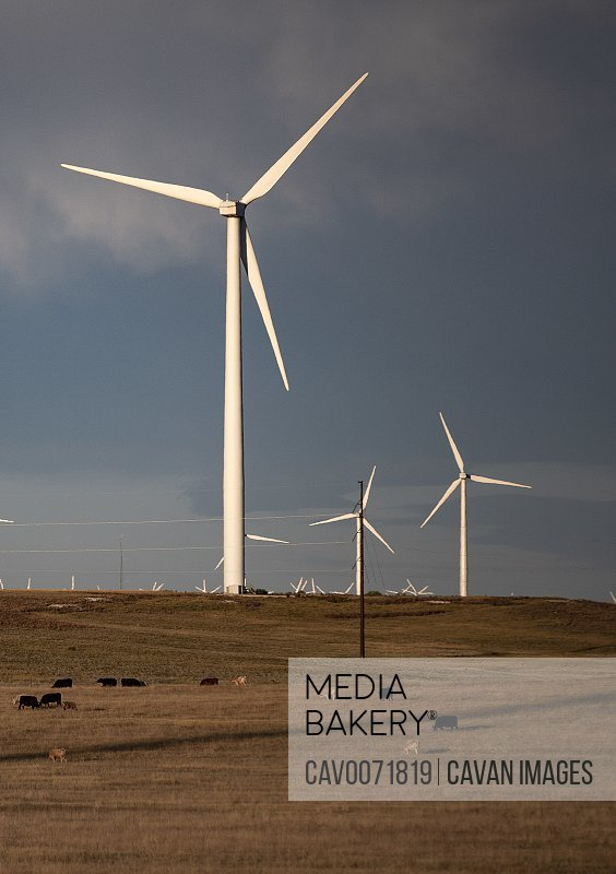 Wind Turbines in field against cloudy blue sky at sunset