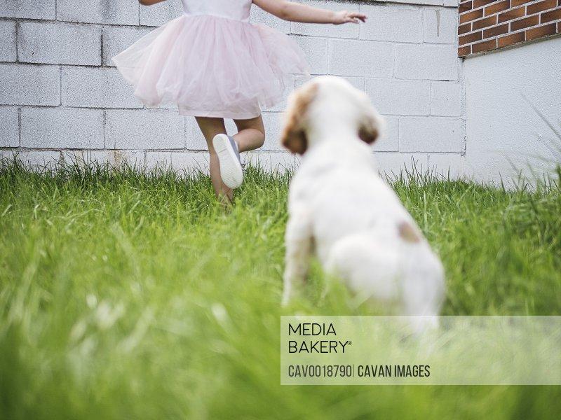 English setter puppy running next to girl